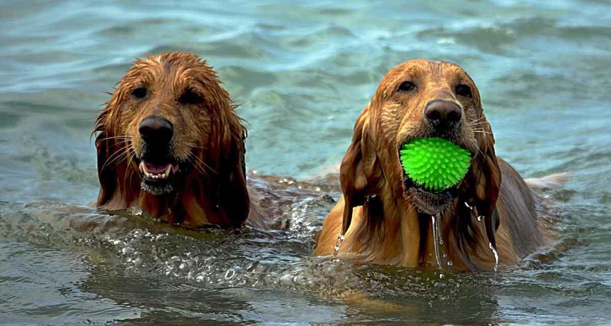 Huisje aan het water met hond
